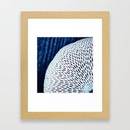 Polypore Framed Art Print