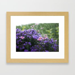 Asters and Japanese Anemones Framed Art Print