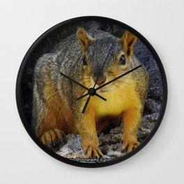Jeronimo Rubio Photography - Peanut the Squirrel (1) Wall Clock