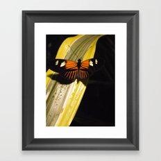 Butterfly on Leaf Framed Art Print