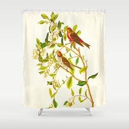 Lesser Red-Poll Bird Shower Curtain