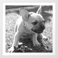 french bulldog Art Prints featuring French Bulldog by Kathleen Follert