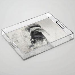 HorSe (V2 grey) Acrylic Tray