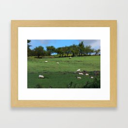 Field of Irish Sheep Framed Art Print