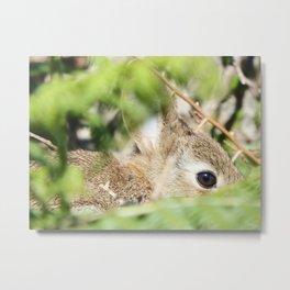 Wild Rabbit Metal Print