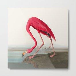 Fuchsia Flamingo Audobon Painting Metal Print