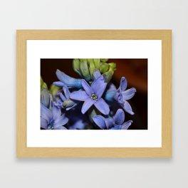 Hyacinthus Framed Art Print