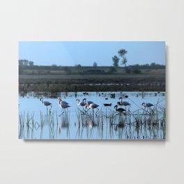 Flamingos Birds Wading River Bank Lake Metal Print