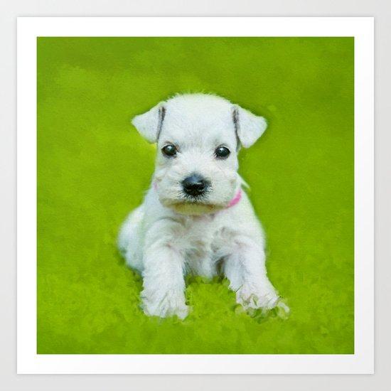 White Schnauzer Puppy by k9printart