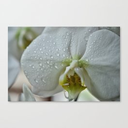Pure Orchid Canvas Print