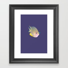 Determined damsel fish Framed Art Print