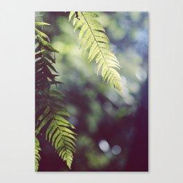 Tauranga Fern Canvas Print