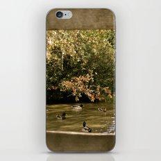 Duck Pond iPhone & iPod Skin