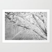 Early Spring Blossoms Art Print