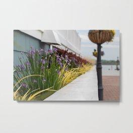 Waterfront Flowerbeds in Old Town, Alexandria Metal Print