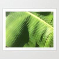 banana leaf Art Prints featuring Banana Leaf by Glenn Designs