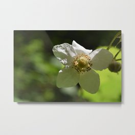 The White Blossom Metal Print