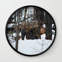 Male Moose in the snow in Jasper National Park Wall Clock