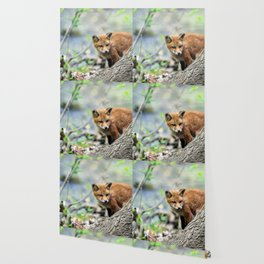 Fox cub exploring Wallpaper