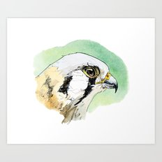 South Eastern American Kestrel Art Print