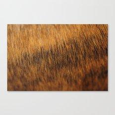 Brindle Fur Canvas Print