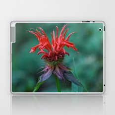 Scarlet Bee Balm {Monarda didyma L.} Laptop & iPad Skin