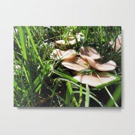 Mushroom Cricket Metal Print