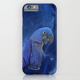 Hyacinth Macaw iPhone Case