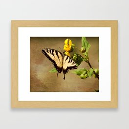 Tiger Swallowtail Butterfly Framed Art Print