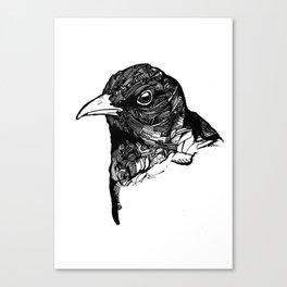Ochrebeak Canvas Print
