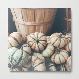 Autumn Pumpkins Metal Print