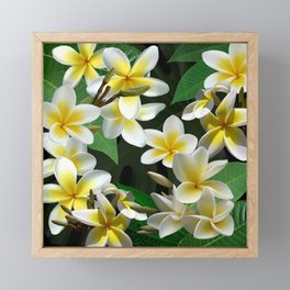 Plumeria Flowers Framed Mini Art Print