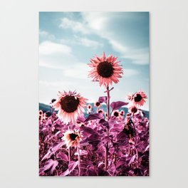 Pink Sunflowers Canvas Print