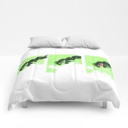 Pantheras tigris Comforters