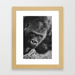 GORILLA STARE Framed Art Print
