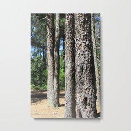 Abitibi Nature30 Metal Print