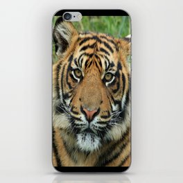 Graceful Gaze 🐾 Bengal Tiger iPhone Skin