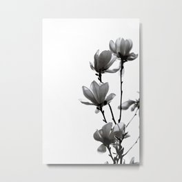 BLACK MAGNOLIA Metal Print