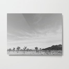 Joshua Tree Grove Metal Print