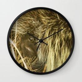 Porcupine Hiding Wall Clock