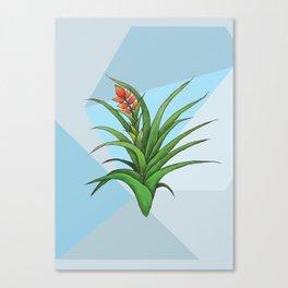 Geometric Air Plant Canvas Print
