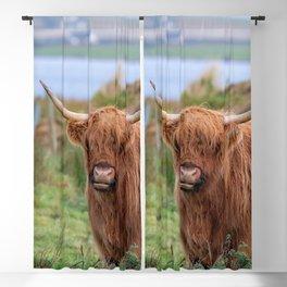 Long haired Highland cattle - Highland cow, Highlander, Heilan coo - Thurso, The Highlands, Scotland Blackout Curtain