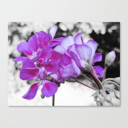 fuchsia flOWERS Pop of Color Canvas Print