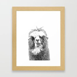 Black and White Alpaca Framed Art Print