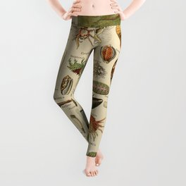 Vintage sealife and seashell illustration Leggings