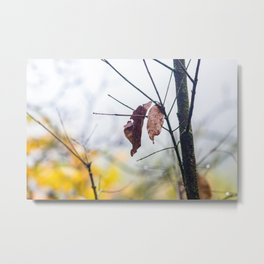 Orange leaves, trying to stay alive Metal Print