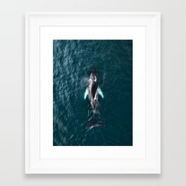 Humpback Whale in Iceland - Wildlife Photography Framed Art Print