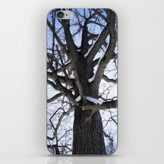 Winter Foresty iPhone & iPod Skin
