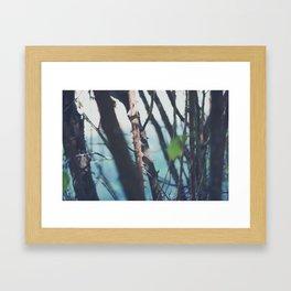 Les Landes (6) Framed Art Print