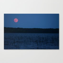 Red Moon Over The Reeds Canvas Print